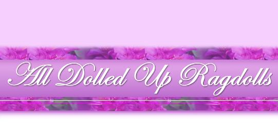 All Dolled Up Ragdolls - Ragdoll Cats & Kittens - Cattery located in New Jersey